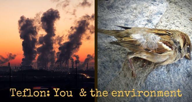 Teflon, You and the environment